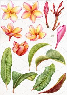 Exotic Flowers, Tropical Flowers, Purple Flowers, Tropical Garden, Botanical Art, Botanical Illustration, Watercolor Flowers, Watercolor Paintings, Hawaii Flowers Drawing
