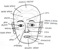 Diagnostická zóna jater a žlučníku se nachází mezi obočím nad kořenem nosu Medicine Book, Health And Beauty, Health Fitness, Akupresurní Body, Sport, Forks, Healthy, Plants, Medicine