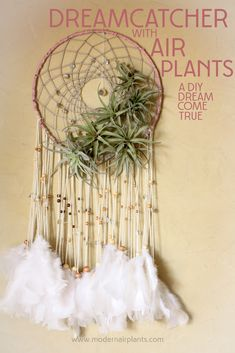 Who knew? dreamcatchers and air plants are a perfect combo