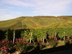 #Weinwanderung in Stuttgart-Rotenberg - miomente.de
