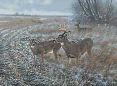 Frosted Morning-Whitetail Deer by Michael Sieve  |  Wild Wings