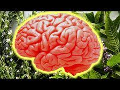 🍀 Daca creierul tău suferă, consuma aceste 5 plante care stimulează creierul   Eu stiu TV - YouTube Health Fitness, Make It Yourself, Ethnic Recipes, Youtube, Self, Plant, Fitness, Youtubers, Youtube Movies