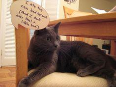 bad cat...tumblr pic
