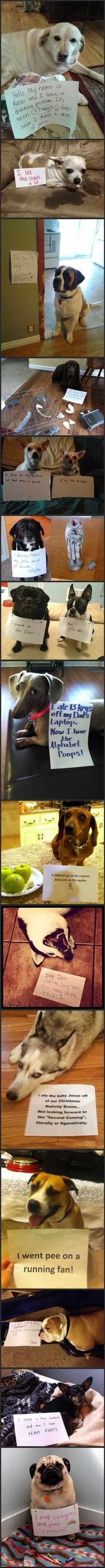 Dog shaming, part 99 - http://limk.com/news/dog-shaming-part-99-081363963/