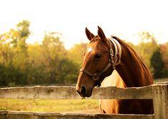 Horse Photography  Fine Art Print by Studio407PrintShop on Etsy :: © Chelsea Mazur Photography 2012-2015 :: https://www.etsy.com/shop/Studio407PrintShop