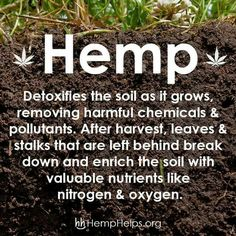 """Hemp --and people want to consume this junk """"removing harmful chemicals and pollutants"""" Yeah, where do you think those harmful chemicals and pollutants will go if you use Hemp? Yup, that's right . Into your guts. Brilliance! Absolute brilliance. Why not play russian roulette with a gatling gun? Grr!"""