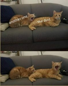 60 + New Hot Funniest Cat Memes to Welcome 2020 - Memes - humor Funniest Cat Memes, Really Funny Memes, Stupid Memes, Stupid Funny Memes, Funny Relatable Memes, Haha Funny, Funny Humor, Memes Humor, Funny Stuff