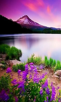#Landscape #photography #Nature #Purple #Flowers #Lake #Mountains
