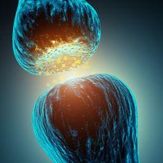 Clay NS - Neuropsicólogo: Neurotransmissores