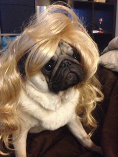 Please Take A Second To Look At These Dogs In Wigs