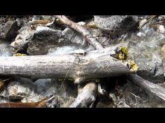 Film about Trail running in #Austria at lake #Achensee: http://laufspass.com/laufberichte/2013/achseelauf-2013-film-02.htm