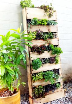 sassafrasgardening:    Go vertical!  Click the pic for more details.    what a cool idea!