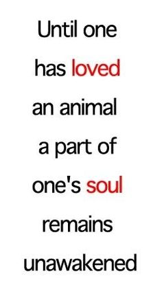 Loved an animal
