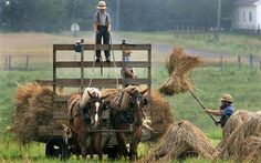 The Amish communities of North America reject the modern way of life, many of them using horses rather than cars. Amish Pie, Amish Farm, Amish Country, Country Life, Country Kitchen, Amish Family, Ohio, Amish Culture, Amish Community