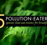 Bioremediation: 5 Species That Eat Pollution for Breakfast | Inhabitat - Sustainable Design Innovation, Eco Architecture, Green Building