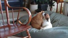 Odd couples-Cat and Dog Kissing and Cuddling