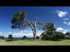 National Park Brijuni | dream-croatia.com