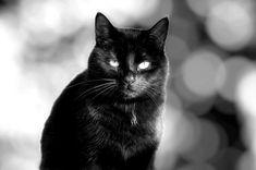 https://flic.kr/p/S1aT1f | Cat