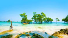 Andaman and Nicobar Islands is an eco-friendly tourist destination with numerous worth visiting beaches, ancient sites, and legends that will entice everyone! Read more…