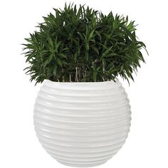 Yayoi Planter ($222) ❤ liked on Polyvore featuring home, outdoors, outdoor decor and fiberglass planters