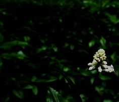 darkness 6 Darkness, Explore, Plants, Photography, Photograph, Fotografie, Photoshoot, Plant, Planets