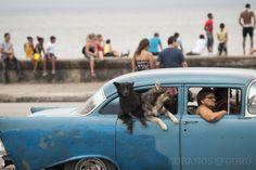 Significados de la palabra #perra en #Cuba http://www.cubanos.guru/significados-la-palabra-perra-cuba/