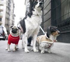 7 Best Pet Names images | Pet names, Pets, Puppies