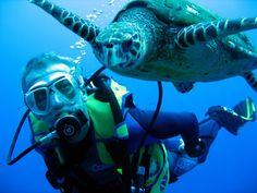 Plongée sous marine.