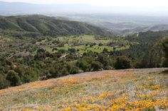 Wildflowers on Figueroa Mountain, Los Padres National Forest Figueroa Lookout