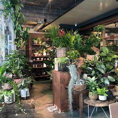 Flower Shop Interiors, House Plants, Flowers, Instagram, Interior Design, Indoor House Plants, Flower Shop Decor, Foliage Plants, Houseplants