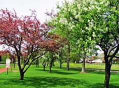 Spring Trees HD Wallpapers, Wallpapers For Desktop, Android, Iphone,nature wallpapers,anime wallpapers,car wallpapers