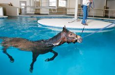 aquatic therapy for horses | Equine Swimming Pool – Redmond – Pegasus Training & Equine ...