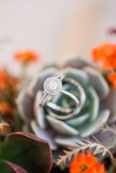 Annapolis Maryland Elopement - United with Love   Britney Clause Photography   Halo Engagement Ring with Wedding Bands on Succulent