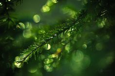 I Photograph Nature With Circular Bokeh Backgrounds | Bored Panda