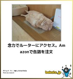 念力でルーターにアクセス。Amazonで缶詰を注文 もっと見る Funny Cats, Funny Jokes, Hilarious, Animals And Pets, Cute Animals, Can't Stop Laughing, Make You Smile, Funny Pictures, Humor