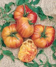 Mr. Stripey. Heirloom. Large, red and yellow striped. Mild flavor, high sugar content, low acid.