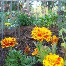 Cómo conseguir que las plantas den más flores ecoagricultor.com