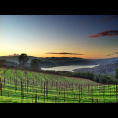 Stunning Views - Chappellet Winery - Napa Valley