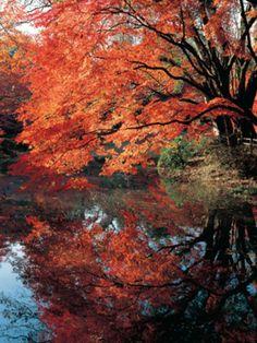 Kyoto Botanical Garden, Japan 京都府立植物園