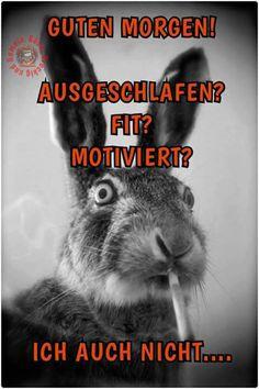 Die 75 Besten Bilder Von Hasen Und Mehr Bunny Kaninchen