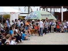 Bioparc Valencia y AUPA reúnen fuerzas y vuelven a liarla parda con el 5º desfilesolidario de perros abandonados el domingo 14 de diciembre.  . ¿Merezco un PIN?