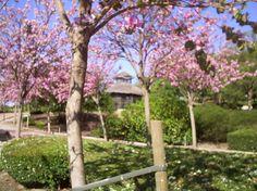 LA PALOMA PARK Benalmadena: Bekijk 2.366 beoordelingen, artikelen en 608 foto's van De La Paloma park, geclassificeerd op TripAdvisor als nr.1 van 53 attracties in Benalmadena.
