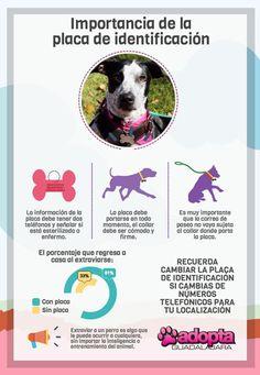 Correa, arnés o collar: La seguridad de tu perro al pasear | Adopta.mx