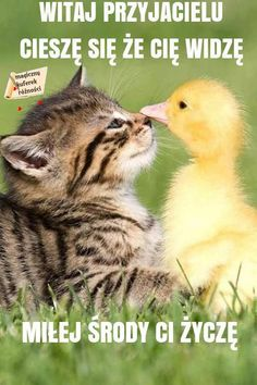 This Couple Thought Their Cat Ate Their Baby Ducks — You Won't Believe What Happened Next Cute Kittens, Cats And Kittens, Animals Kissing, Baby Animals, Cute Animals, Amazing Animals, Animals Beautiful, Baby Ducks, Dios