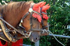 Horse drawn carriages in Braunwald, car-free village in Canton Glarus - Switzerland