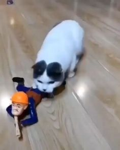 Cute Funny Animals, Cute Baby Animals, Funny Cute, Animals Dog, Hilarious, Cute Animal Videos, Funny Animal Pictures, I Love Cats, Crazy Cats