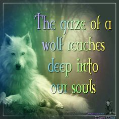 The Gaze of the Wolf Reaching Deep Into Our Souls Wolf Spirit, Spirit Animal, Beautiful Creatures, Animals Beautiful, Adorable Animals, Wolf Poem, Animal Logic, Indian Wolf, Native Indian