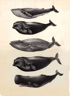 I recently blogged about Whales as Nautical theme over on my blog. Wish I had found this image in time! Love the expressions they wear.