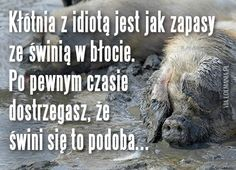 Kłótnia z idiotą Weekend Humor, Motto, Man Humor, Haha, Mindfulness, Inspirational Quotes, Wisdom, Thoughts, Funny