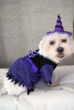 Patrones de Disfraz de Bruja para Perro | Mimi y Tara | Patrones de ropa para perros